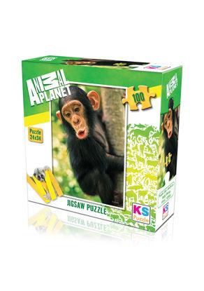 Baby Chimp 100P resmi